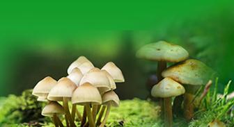 【签约】江苏食用菌协会官方网站设计制作